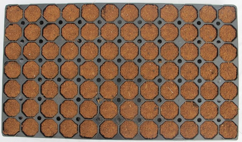 Coco-Perlite Mix Plug Tray 2